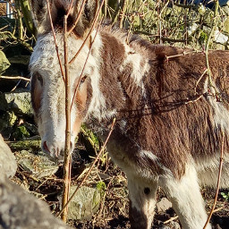 donkey cute sunny donko