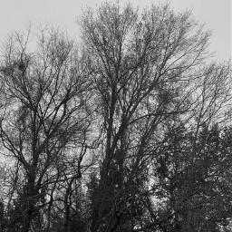 trees winter freetoedit