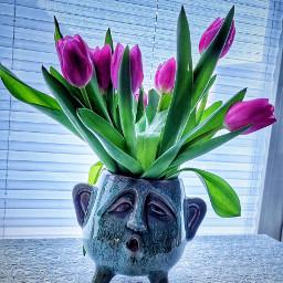 tulpen flowers freetoedit