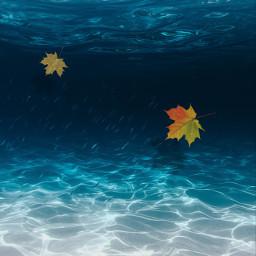 underwater mapleleaves water freetoedit