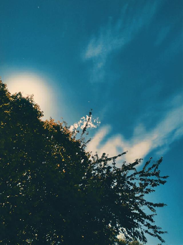💙💙💙 #myphoto #sky #myclick #clouds #trees #sun #mybackyard