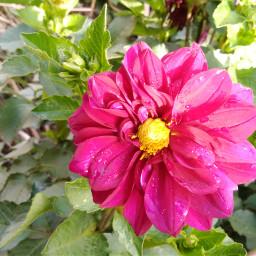 silvestre pcflowersaroundme flowersaroundme