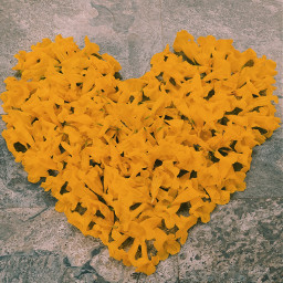 lv flower freetoedit pcflowersaroundme flowersaroundme