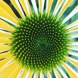 flower green yellow sunshine macrophotography