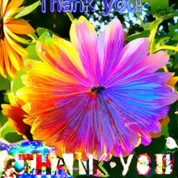 thankyou happymessages sunflower nicetomeetyou appreciateyou thanksforthefollow thankyouforyourlikes artographybypamela artography appreciateart freetoedit