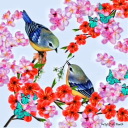 birds flowers freetoedit