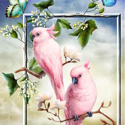 birds parrots butterfly freetoedit
