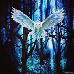 owl dark_forest art freetoedit