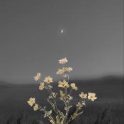 flower grayscale freetoedit