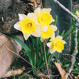 https flowers printemps easterflowers naturephotography pcflowersaroundme