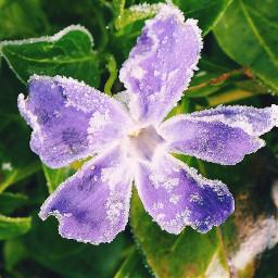 https flowers printemps naturephotography olympus pcflowersaroundme