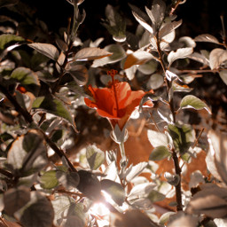 nightflower shadow flowerlover flowerislife pcflowersaroundme