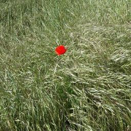 pcflowersaroundme