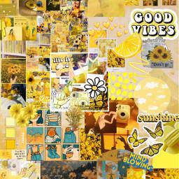 yellow background aesthetic flowers sunflower freetoedit