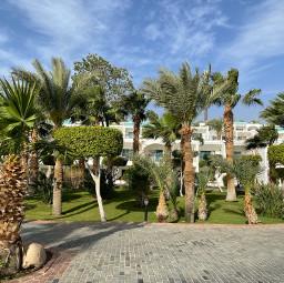 freetoedit egypt summer green palma