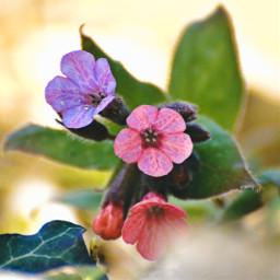 myphoto nature naturelovers flower freetoedit