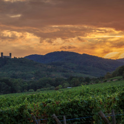photography travel colorful nature landscape vinyard sunset france