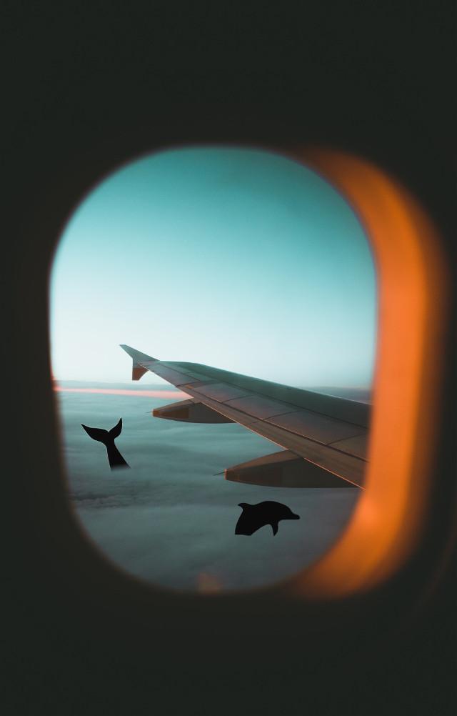 #dolphin #ocean #sky #plane #sunset #france #art #sea #photography #nature #travel #night