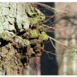 nature naturephotography tree face naturfotografie freetoedit