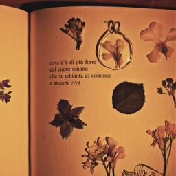 rupikaur flowers nature book vintage photograph photography photo photooftheday freetoedit