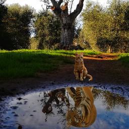 cat tiger tree