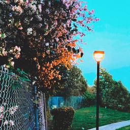 spring springishere