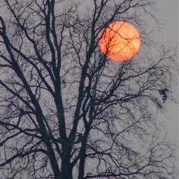 moon bloodmoon freetoedit