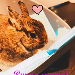 bunny freetoedit