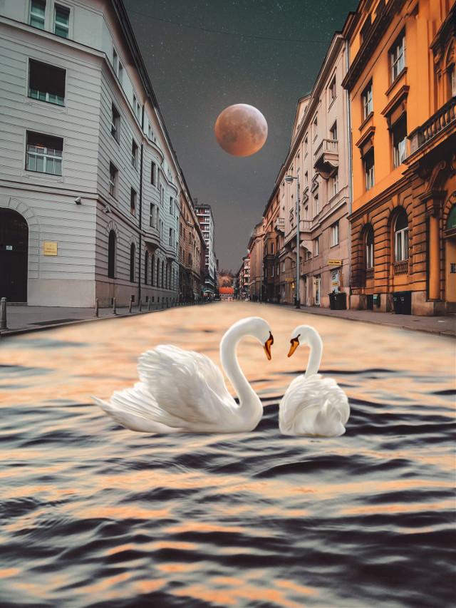 #swans #water #moon #city #heypiscart #madewithpicsart