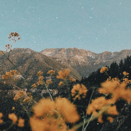 asthetic pretty yellow flowers sky hills mountains feild trees nature freetoedit