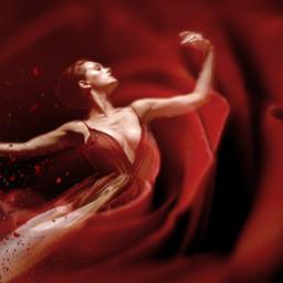 redrose dancer madewithpicsart myedit myremix picsarteffects picsartstickers freetoedit