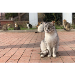 cat animal catlover catlife domestic pet day park nopeople looking mio