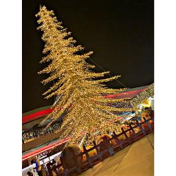 celebration tree crowed decoration christmastree night outdoors city