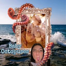 frame octopuss srcornateframe ornateframe freetoedit
