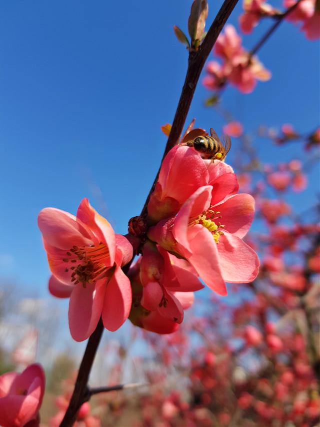 #closeup #flowers #nature #myphotography # è PRIMAVERA 20/03/2021