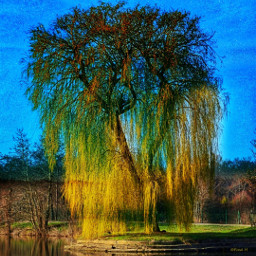 weepingwillow weide tree france water