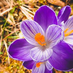 flower beautiful nature photography violet followme freetoedit