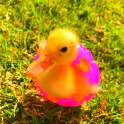 indie indieduck duckling indieedit indiefilter duck summer sunshine sunray floatie kidcore kid core filter kidcoreedit kidcorefilter