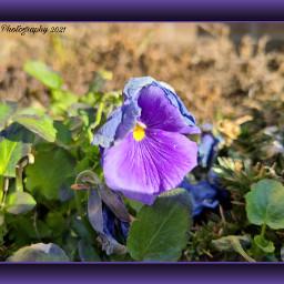 flower purple photography egphotography2021