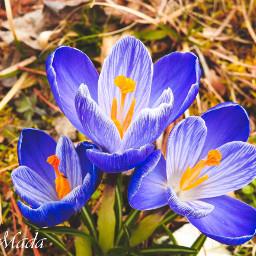 flower beautiful followme photography freetoedit nature