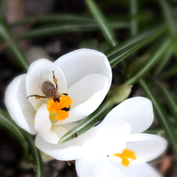 spring flower bee nature
