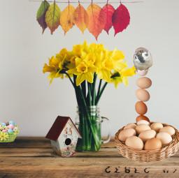 easter eggs bird birdhouse leaf freetoedit unsplash