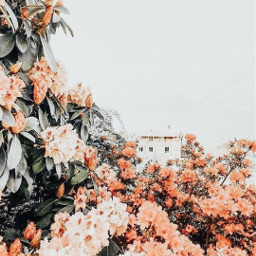 floweraesthetic