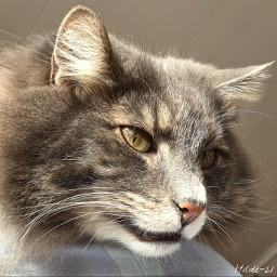 cat petsandanimals pet