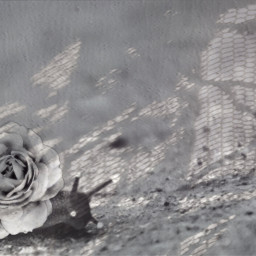 snail flower cute creative lace shadow effect snails grays blackandwhite glowing glowingeyes myedit freetoedit