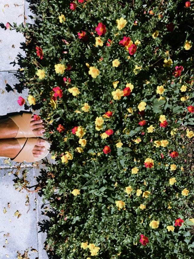 #flower #gardenflowers