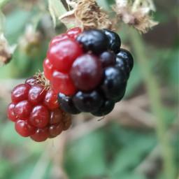 ягоды freetoedit pcfavoritefruitsandveggies favoritefruitsandveggies