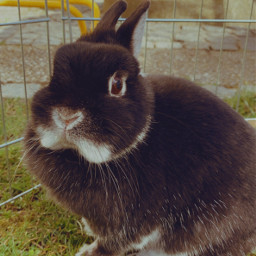 bunny blacky cute freetoedit