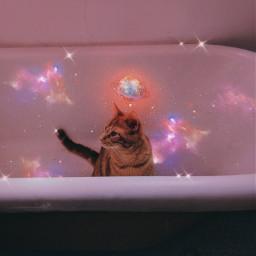 cat cats galaxy universe planet freetoedit