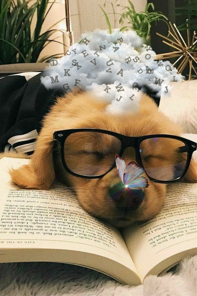 @claudia_remosan #dog #cachorro #fantasia #fantasy #cachorrointelectual #humanizado #humanized #funny #cute #fofo #sleeping #dormindo #borboleta #butterfly #cloud #nuvem #dream #sonho